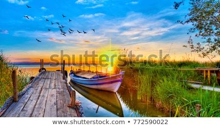 Coloré paysage coucher du soleil ciel arbre Photo stock © All32
