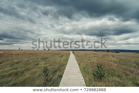 Dramtic Sky Background Stock photo © manfredxy