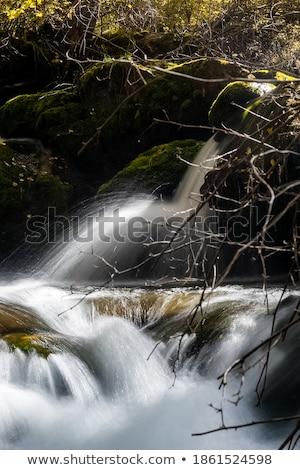 小 滝 美しい 草 木材 自然 ストックフォト © Avlntn