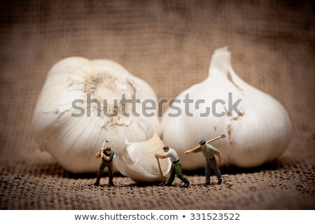 minuature workers cutting up a garlic bulb color tuned photo stock photo © kirill_m