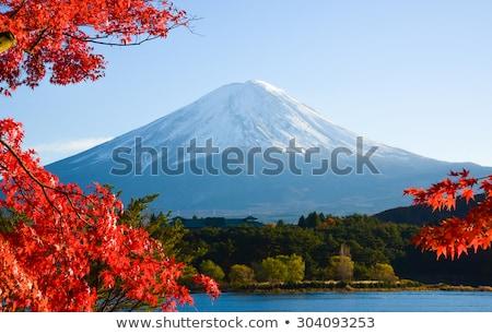 Mount Fuji vallen sneeuw bomen berg Stockfoto © craig