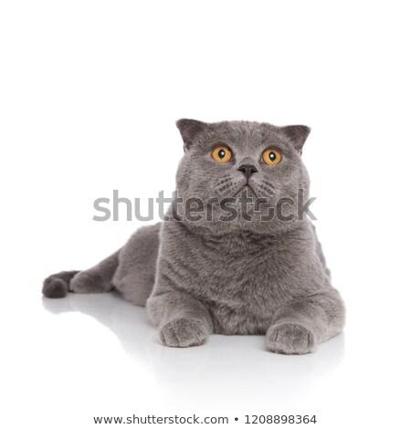 Foto stock: Sorprendido · lado · blanco · gato · fondo