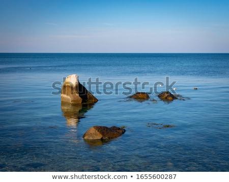 Feminino pato flutuante superfície da água primavera olho Foto stock © taviphoto