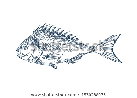 Common Perch Popular Edible Fish Specie Poster Stock photo © robuart