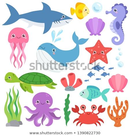 Ahtapot ikon vektör sanat klibi dizayn deniz Stok fotoğraf © blaskorizov