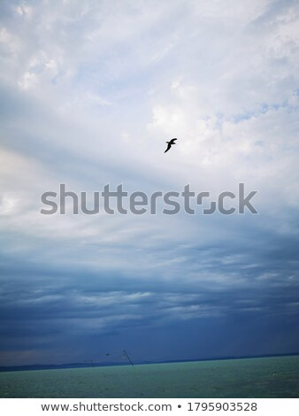 Flying birds on a background of the cloudy sky in a fashionable pantone trendy color of the year 201 Stock photo © artjazz