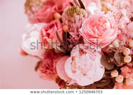Güzel çiçekler yaşayan mercan renk bahçıvanlık Stok fotoğraf © dolgachov