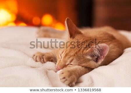 Sweet lazy evening at the fireplace - orange kitten lying on whi Stock photo © ilona75