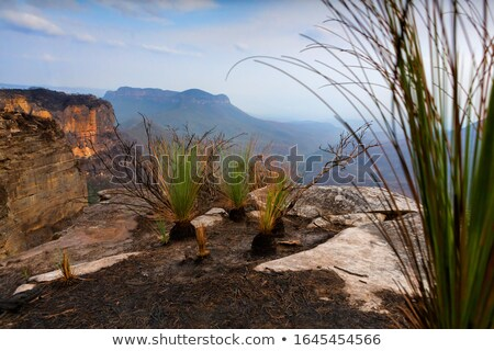 Azul montanhas vale arbusto fogo Foto stock © lovleah