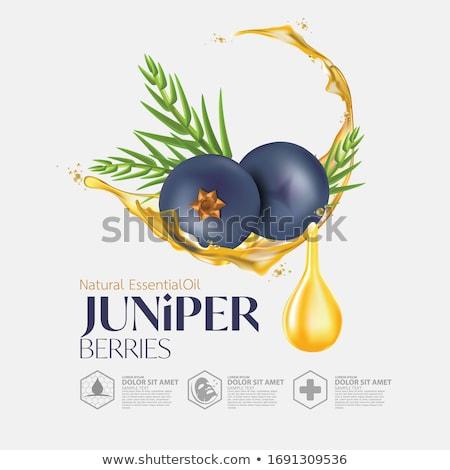 juniper tree Stock photo © wildman