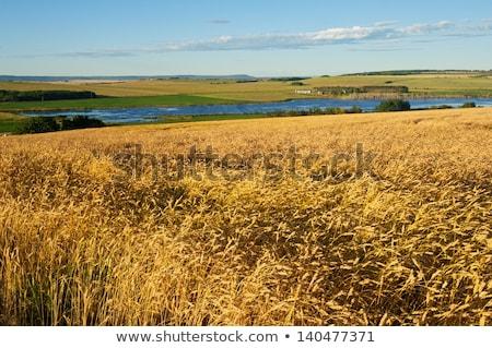 пруд · Саскачеван · Канада · воды · трава - Сток-фото © pictureguy