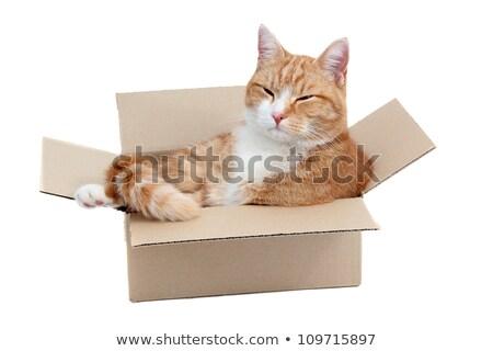 remoção · caixa · papel · gato · pesquisar · doce - foto stock © pterwort