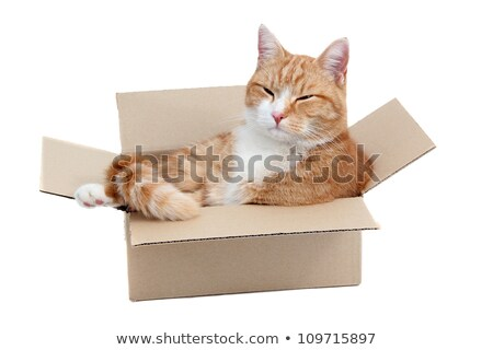 Inquisitively Tomcat In Paper Box Stock fotó © pterwort