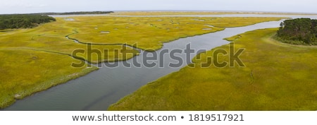 Salt marsh Stock photo © IngaNielsen