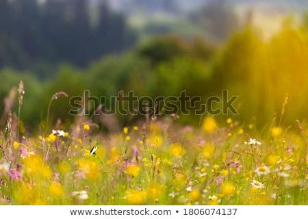 Berg glade mooie landschap wolken reizen Stockfoto © silent47