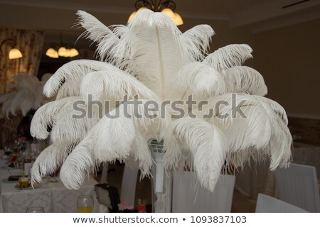 white ostrich feather Stock photo © jirkaejc
