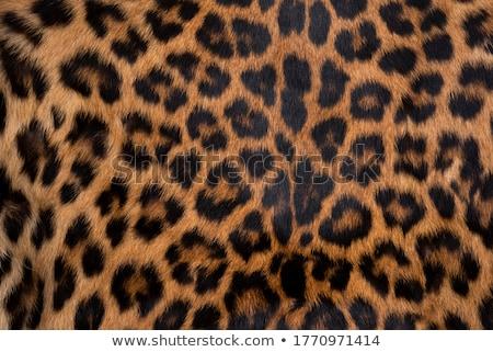 Gepárd szőr közelkép absztrakt igazi természet Stock fotó © KMWPhotography