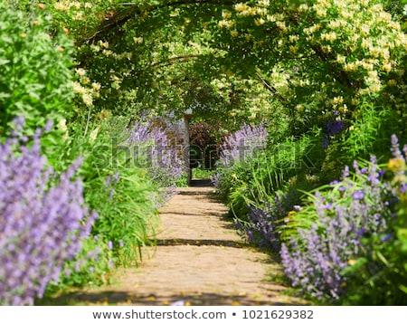 Bahçe yol çakıl İngilizce duvar yeşil Stok fotoğraf © trgowanlock