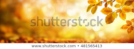 autumn card of colored leafs with copy space stock photo © beholdereye