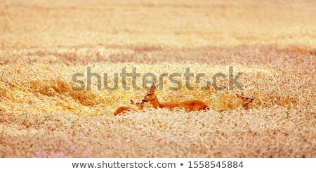 оленей Фермеры области желтый Канада Сток-фото © pictureguy