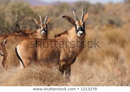 Bebek doğa Afrika hayvan safari açık Stok fotoğraf © chris2766