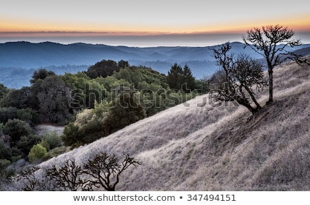 Sunset at Russian Ridge Open Space Preserve, San Mateo County Stock photo © yhelfman
