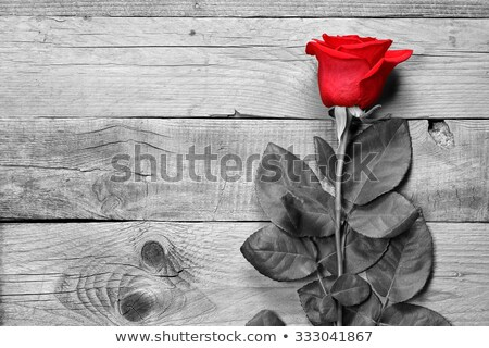 Red rose on a wooden background Stock photo © Valeriy