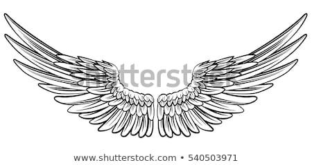 Pair eagles Stock photo © papa1266
