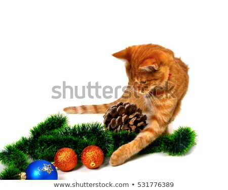 red headed kitten play with christmas tinsel christmas tree bal stock photo © bsani