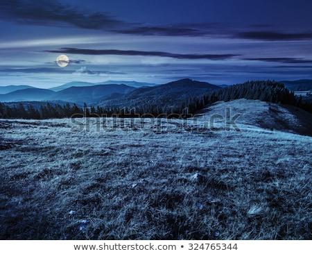 night grass hill and moon Stock photo © romvo