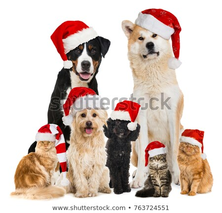 cute group of christmas cats and dogs of different breeds stock photo © feedough