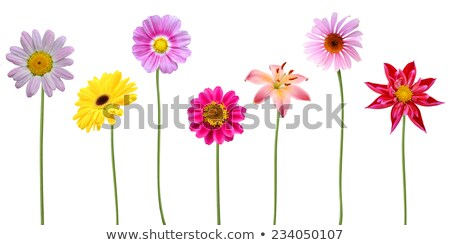 Different kinds of flowers Stock photo © colematt