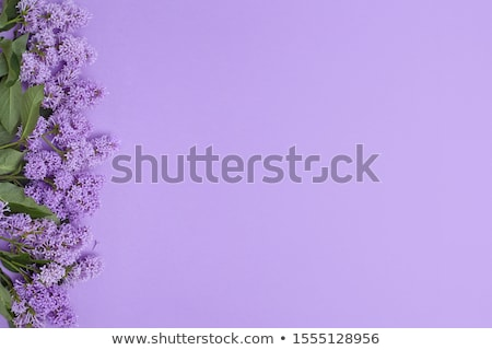Frame of lilac flowers and space for text Stock photo © Kotenko