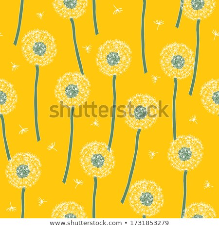 Floral seamless pattern. Hand drawn yellow head of dandelion officinale. Wildflower. Taraxacum. Desi Stock photo © user_10144511