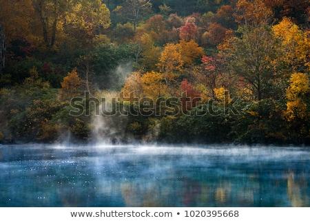 őszi · levelek · tavacska · fedett · zöld · vízi · növények - stock fotó © vichie81