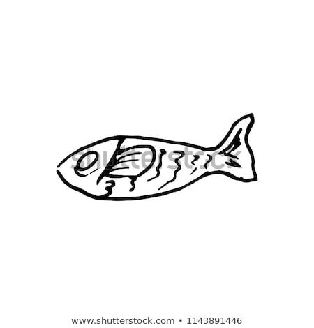 Hal rajz retro rajz stílus édesvíz Stock fotó © patrimonio