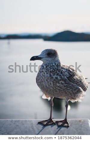 seagull on a rooftop at sunset stock photo © elly_l