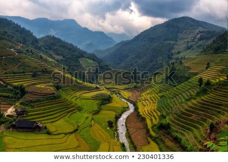 Filipiny górskich w. tytoń dziedzinie słońce Zdjęcia stock © joyr