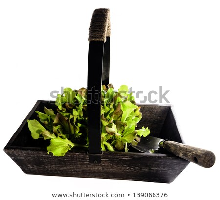 Old Wooden Trug Filled With Lettuce Stock photo © flotsom