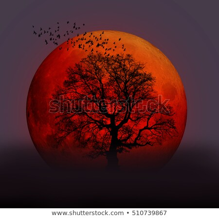 Moon walk and moon phases Stock photo © Ustofre9