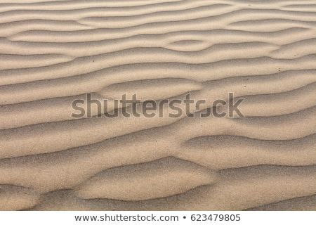 Rippled sand Stock photo © remik44992