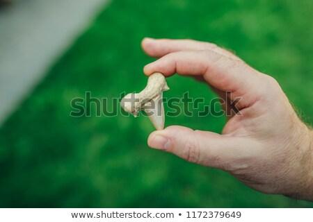 古代 · 化石 · 顎 · 骨 · 5 · 年 - ストックフォト © jonnysek