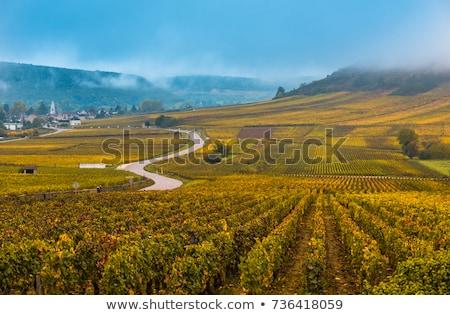 Vineyards and village in Burgundy Stock photo © Hofmeester