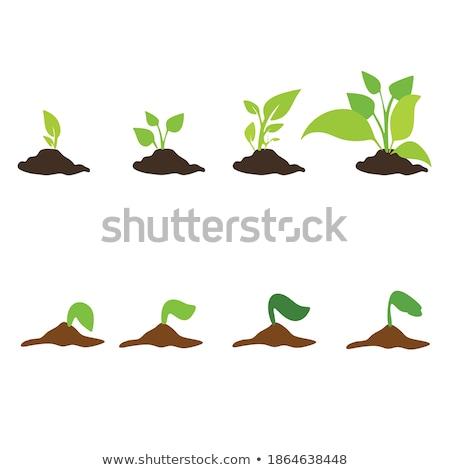 groeiend · plant · stap · munt · geld · hand - stockfoto © hin255