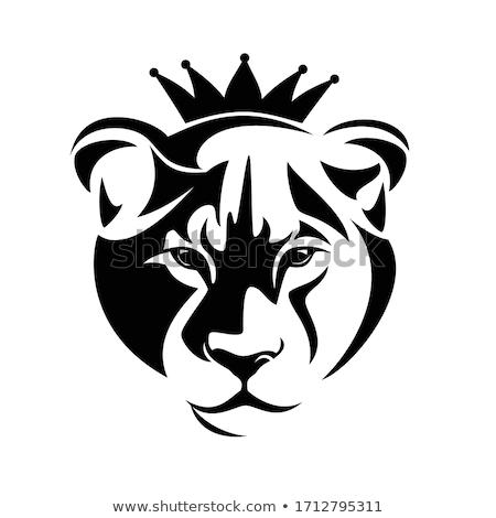肖像 · 誇りに思う · ケニア · ライオン · 頭 · フォーカス - ストックフォト © kmwphotography