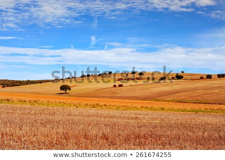 cornfield landscape in the province of Soria, Spain Stock photo © nito