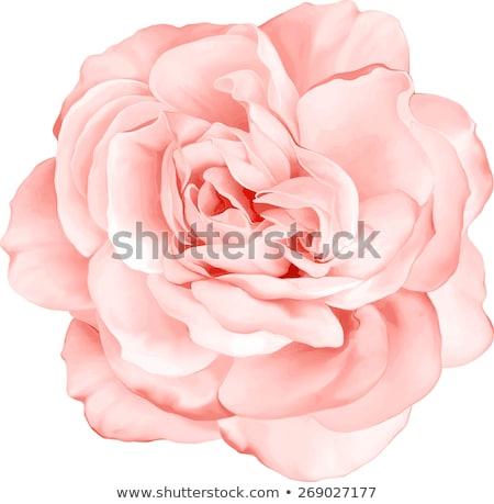 Rózsaszín virág puha stílus virág fény háttér Stock fotó © Kheat