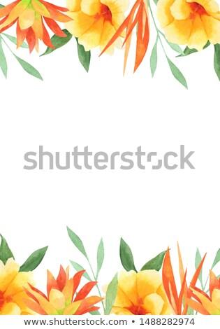 amarillo · naranja · flores · marco · espacio · copiar - foto stock © kirs-ua