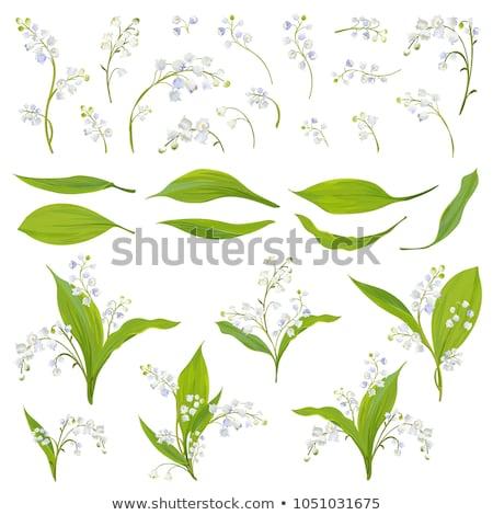 Liliom völgy izolált fehér tavasz erdő Stock fotó © tetkoren