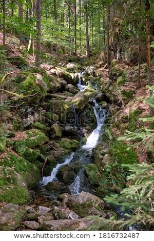 Bos stream bergen mooie gras natuur Stockfoto © Avlntn